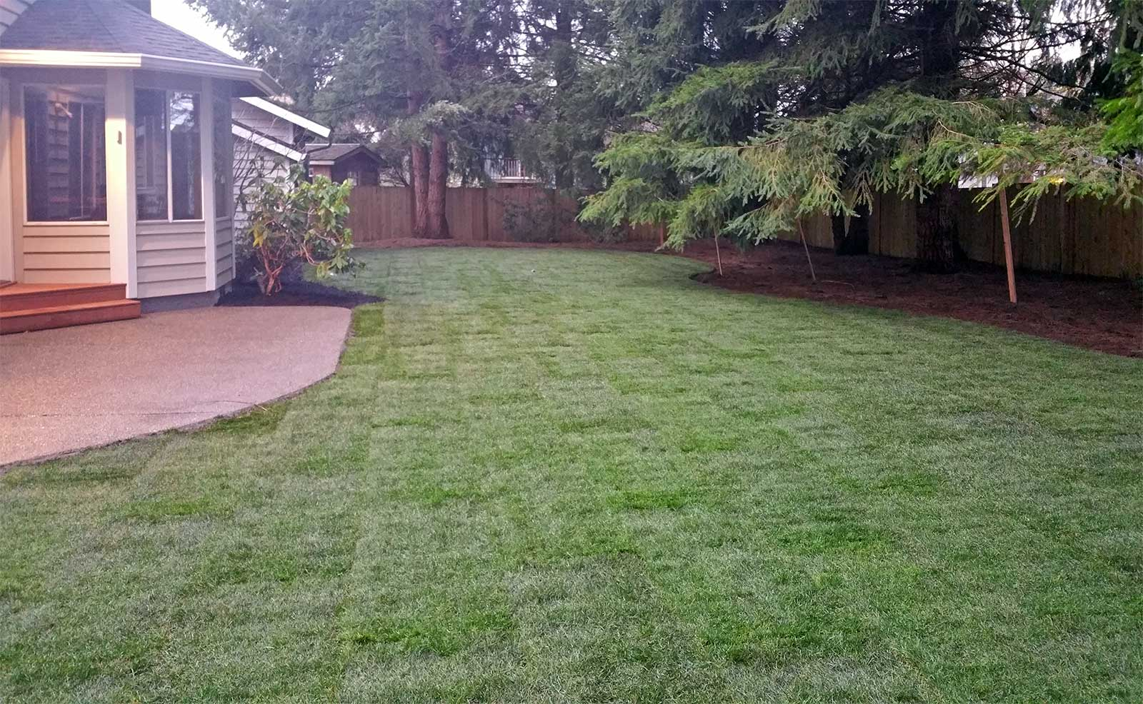 Lawn Replacement in Olympia